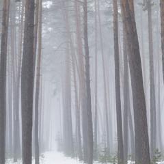 Линии леса