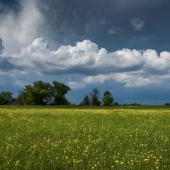 Хроника карантинной весны...(3)