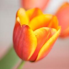 Всех с весной!!!!!!