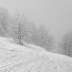 Туманные трассы