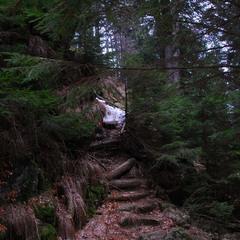 Старый лес (Словения)
