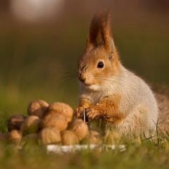 Орешки для белочки