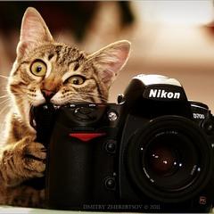Фотографа вызывали?