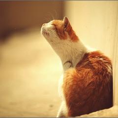 С днем кошек!