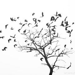 Облетевшая листва...