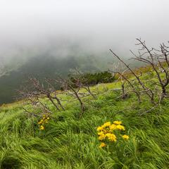 Тумани хребта Розшибеного