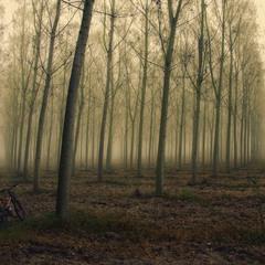 Таинственный лес!