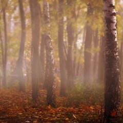 Осенний дождливый кефир