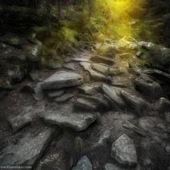 Сквозь темный лес к солнцу