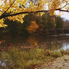 Осень в Пуще.