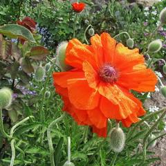 В цвете