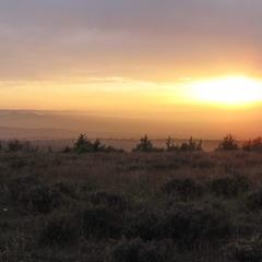 Закат на старой лаванде