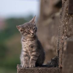Сонне кошеня