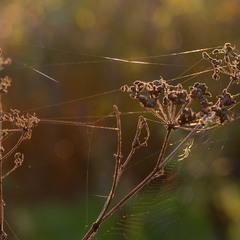 Струни осені