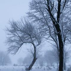 Туманним ранком