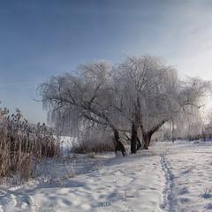 Морозним ранком