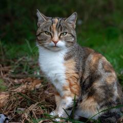 Кішечка з багатою родослівною