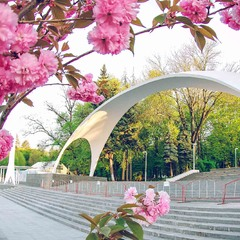 Весняна арка у місті Вінниця )