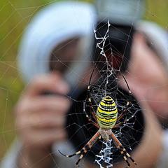 Из  жизни  пауков и фотографов.