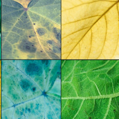 Листья осенью
