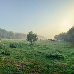 Літній ранок біля лісу