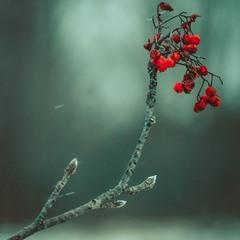 Холодна зима