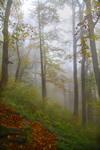 Осінь в Карпатському лісі