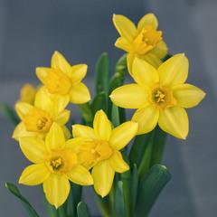 Весна на отдельно взятом подоконнике