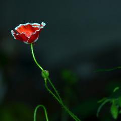 гордое одиночество...