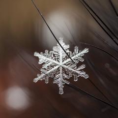 Снежинка на меху