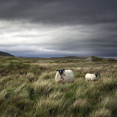 Irish Pastorale