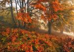 туманний ліс