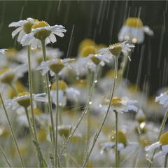 что-то про плач дождя