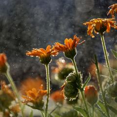 Утренние цветы тянутся к солнцу...