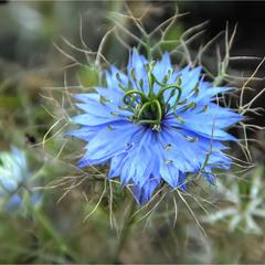 Цветок Счастья или Домик Дюймовочки