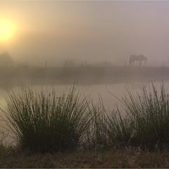 Утренние Бельчаки