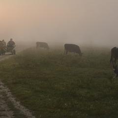 Возвращаясь по утреннему туману...