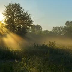 Льется утренний свет