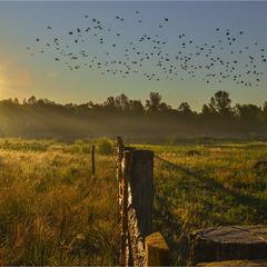 Одним летним утром, когда птицы потянулись к солнцу...