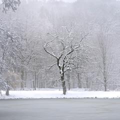 Мовчання зими 01
