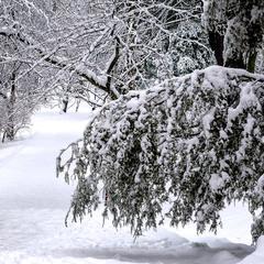 Мовчання зими 04