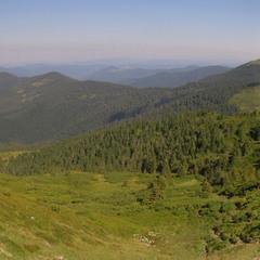 Зеленые волны Карпат(панорама)