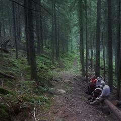 Привал в лесу