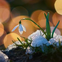 Нарешті весна...