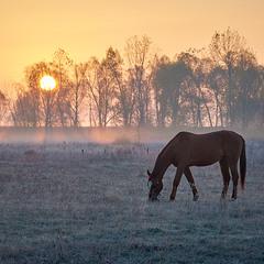 Прохладным октябрьским утром...