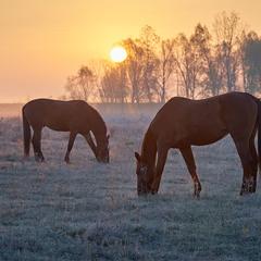 Морозний ранок...