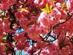 кольори і квіти сезону