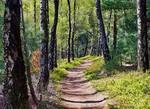 Геометрия леса