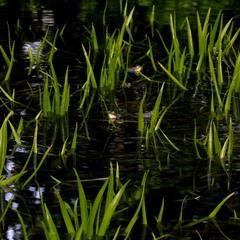 скільки жаб в струмку ?
