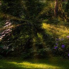 В лесу Волшебника из страны Оц ...или сны Дороти...